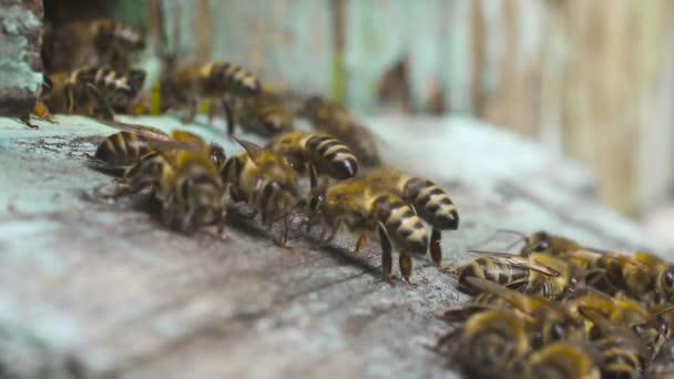 Medonosné včely létají k jejich dřevěnému úlu a plazí se po něm. Vytvořit med z nektaru