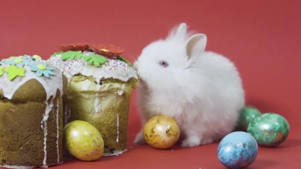 Malý zajíček jí velikonoční dort, pestrobarevná zdobená vajíčka. Červené pozadí