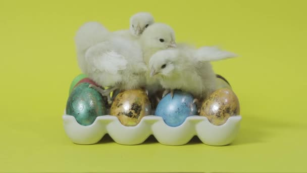 Őrült kis tyúkok ülnek színes húsvéti tojásokon tálcán. Sárga háttér