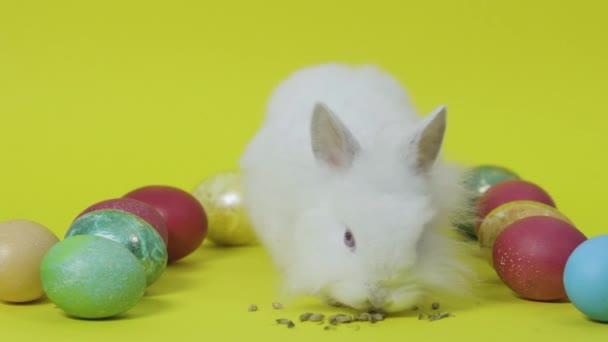 Húsvéti nyuszi eszik takarmány között tojás sárga alapon. Fehér kis nyúl
