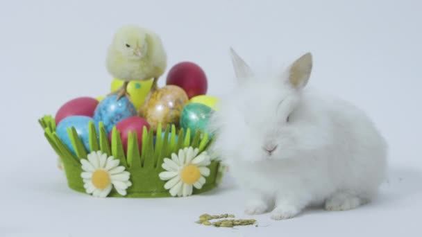 Easter bunny and little chick nearby holiday basket with eggs. White background