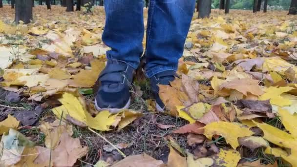 A boy standing on the lawn with fallen yellow maple leaves and spreads them with his feet, autumn, fall time
