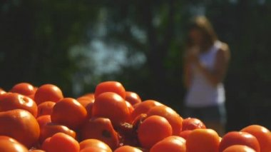 A young woman is standing on a site where a lot of tomatoes lie