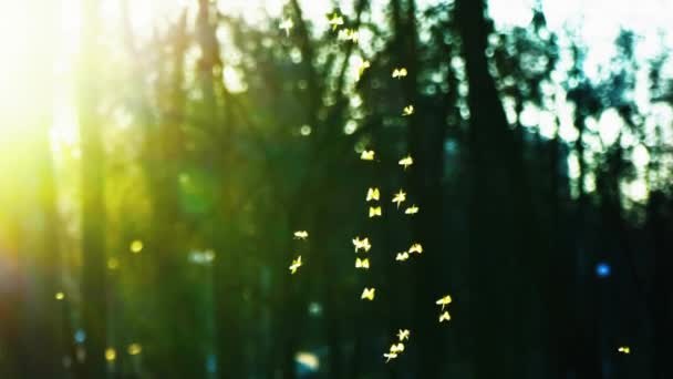 Small midges fly in the park in the rays of the setting sun, Swarm of gnats buzzing in the park, slowm motion