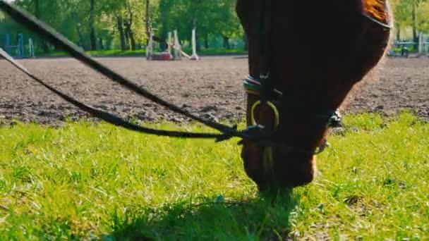 Hnědý kůň v uzdu žere trávu blízko cvičáku, tlamy koně je zblízka