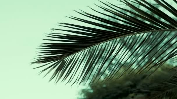 Slow motion of Palm leaves blowing in the wind