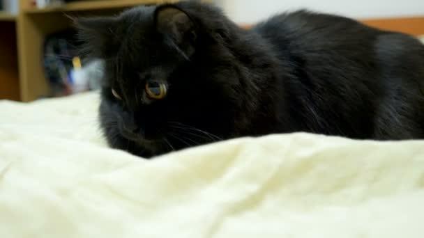 černá kočička v posteli