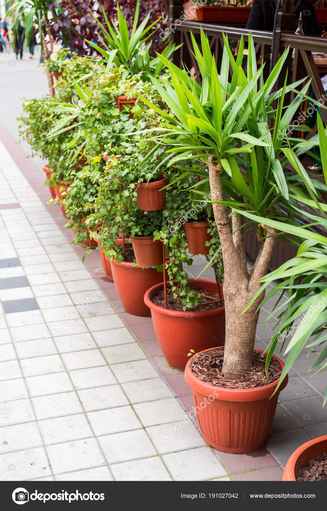 Krzewy I Drzewa W Plastikowe Doniczki Na Kwiaty Zdjęcie