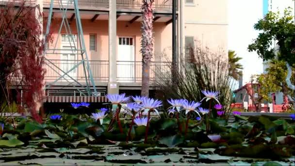 Umělé jezírko s šeřík lotosů