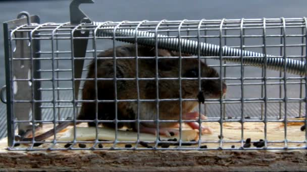 Home little mouse in a mousetrap outdoor