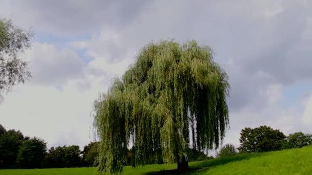 einzelner Baum, der im Park wächst