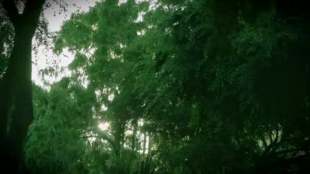 Sunset View keresztül a fák-zöld levelek és ágak