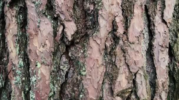 Kamera se pohybuje od shora dolů a odebere kmen stromu.