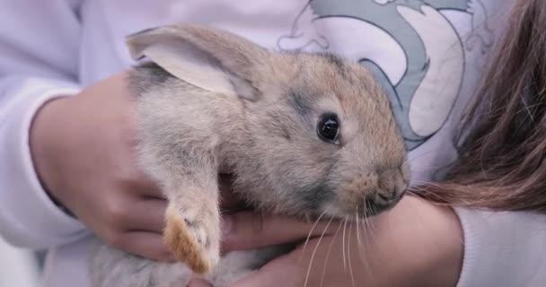 Little rabbit on hands closeup