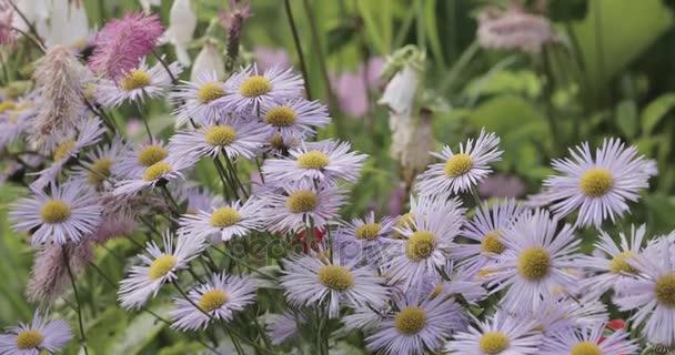 Purple flowers in the garden.