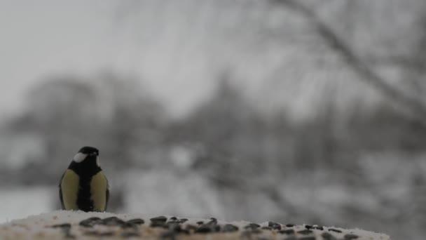 δωρεάν πουλί βίντεο