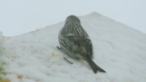 ptáky videa