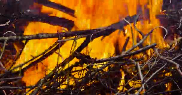 oheň z suché dřevo na ulici brzy na jaře