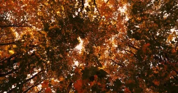 žluté listy padají ze světlé podzimní stromy