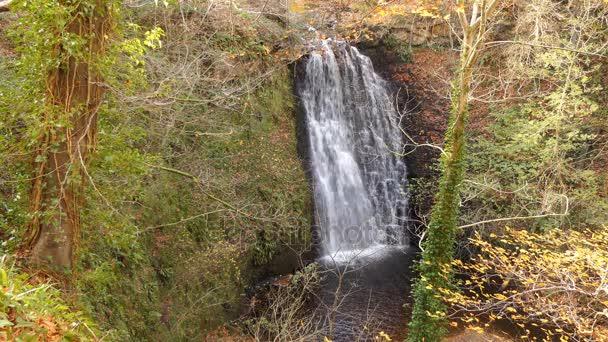 Krásná podzimní scéna v lese v Severním Yorkshiru v Anglii - pohled vodopád padající Foss v lese