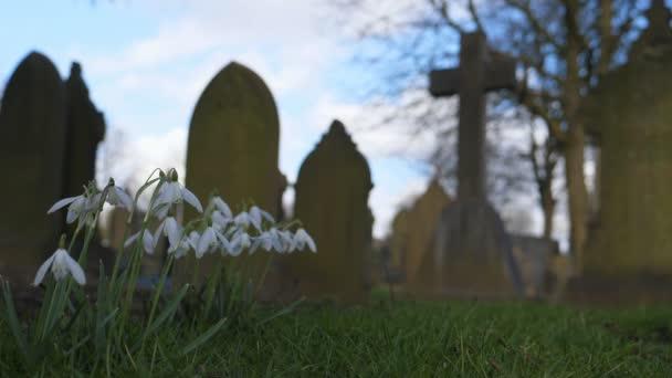 Nízký úhel zblízka střílel z květy sněženek v Starý anglický hřbitov s rozmazaný kříž a další náhrobníky v pozadí v zimě nebo na jaře