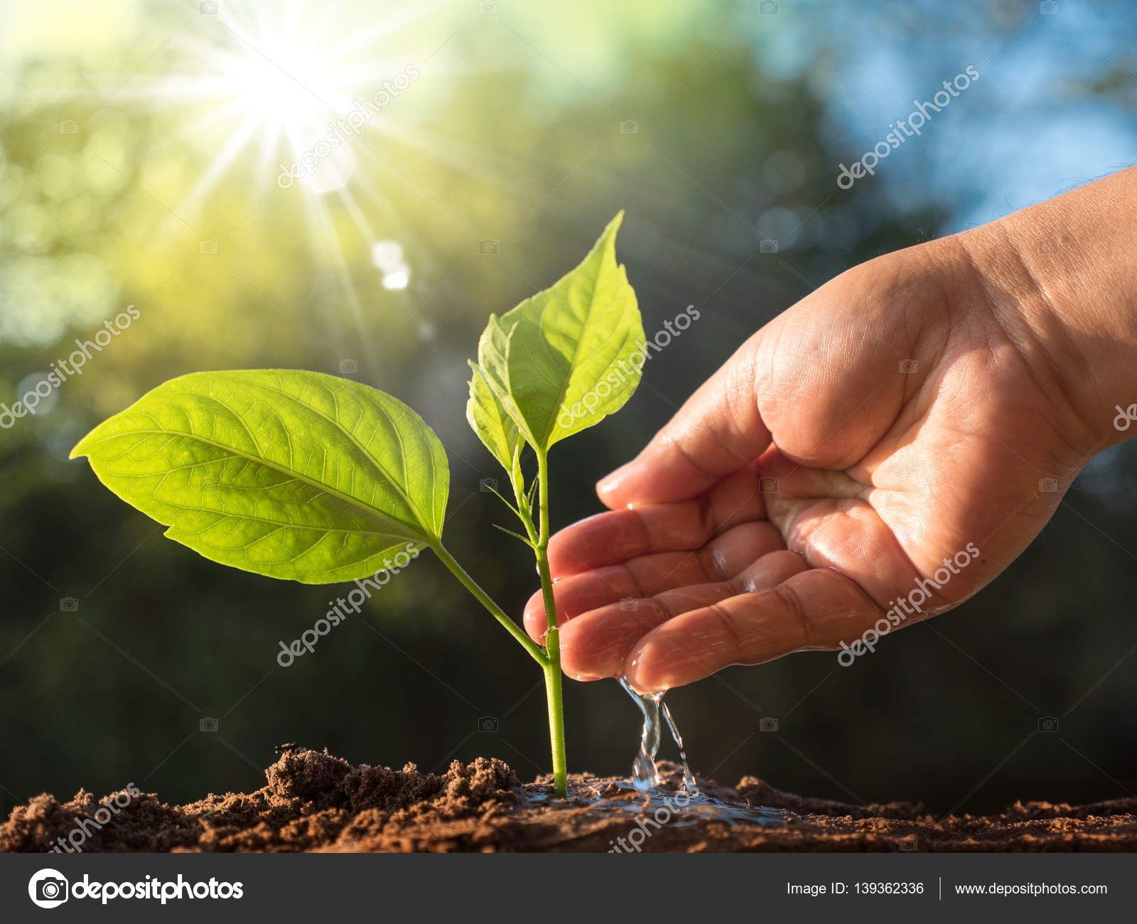 plant and save forest concept stock photo singkham 139362336