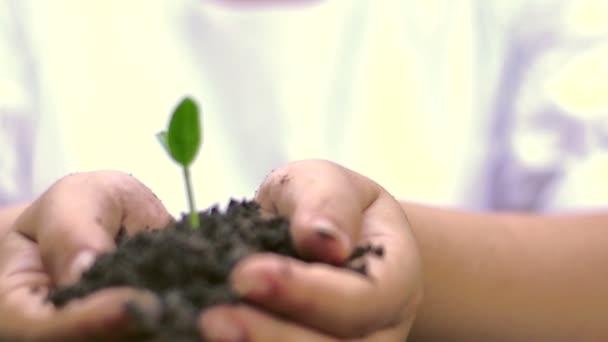 Mani che tengono suolo con il germoglio, primi piani