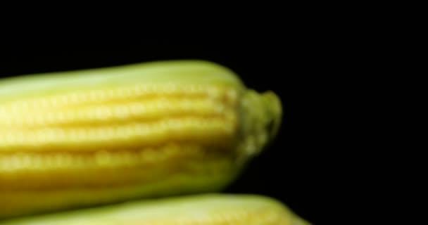 Studio Dolly záběr dvou syrových čerstvých uší kukuřice na černém pozadí s odrazem a dramatickým světlem 4 k