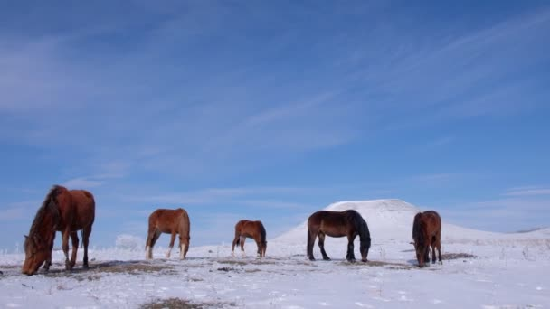 Herd of horses in the field in winter