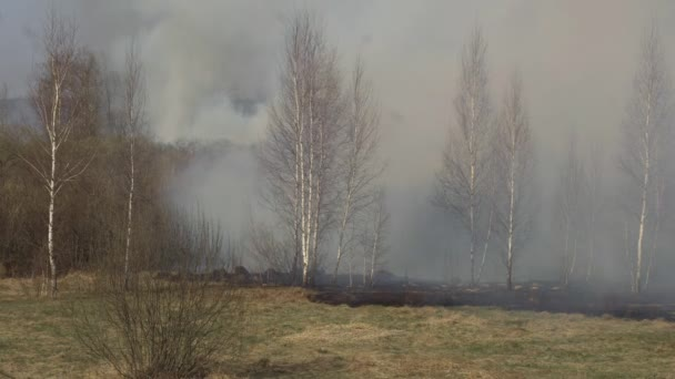 V přírodě hoří Suchá tráva a lesy, hašení lesních požárů požárníky, nebezpečí, pohotovost, ekologie, poškození