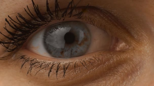 Macro female caucasian blue one eye, eyelids and eyelashes with mascara. Closeup body parts of white european russian woman. Eye blinks and winks. Looking directly into camera lens. Normal usual view