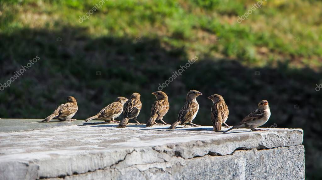 A group of sparrows twittering in a summer park