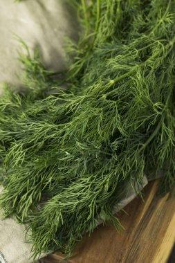 Raw Green Organic Whole Baby Dill