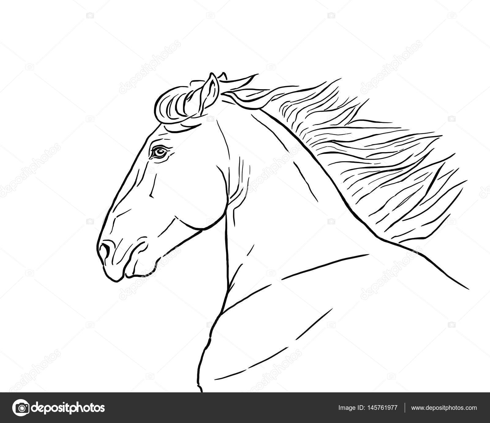 Execution De Tete De Cheval Illustration Realiste Raster Contour
