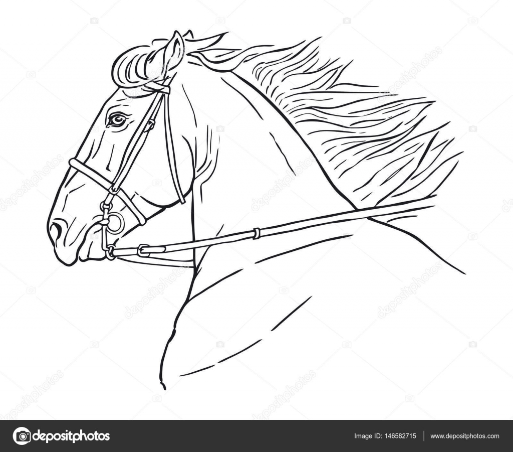 Horse Head Outline Drawing Line Drawing Of A Horse S Head On A White Background Running Horse Head Stock Vector C Martanovak 146582715