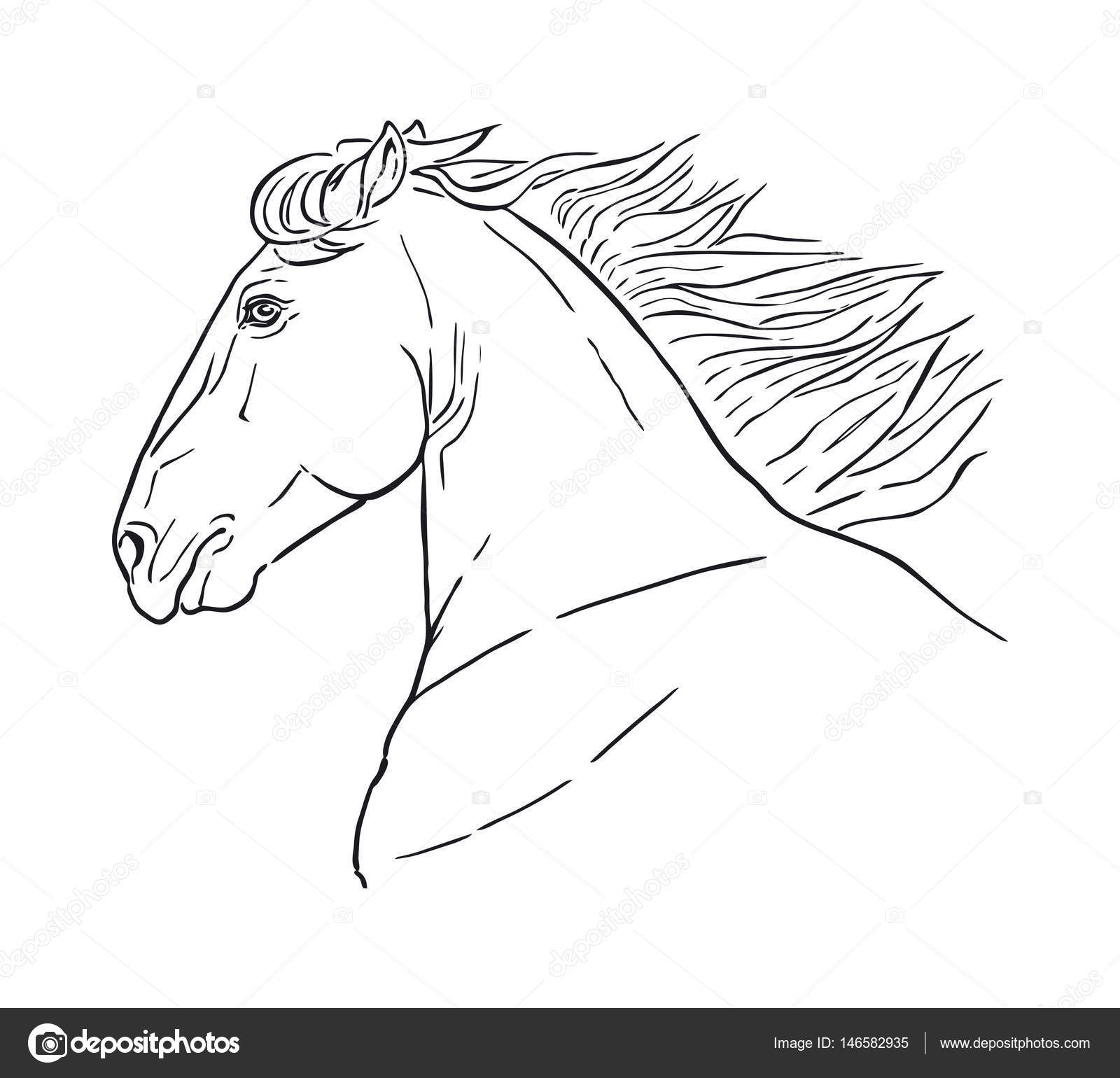 Drawings Line Drawing Of A Horse Line Drawing Of A Horse S Head On A White Background Running Horse Head Stock Vector C Martanovak 146582935