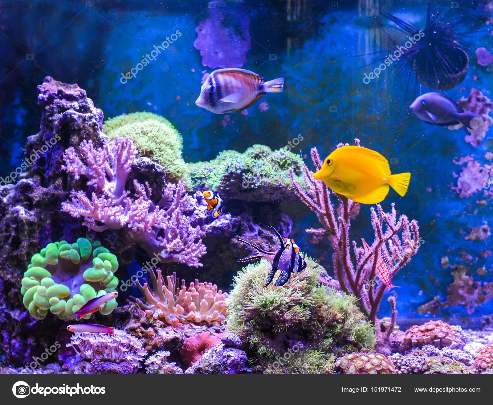 saltwater aquarium galleries for reef aquariums decor large custom decoration tanks design coral living