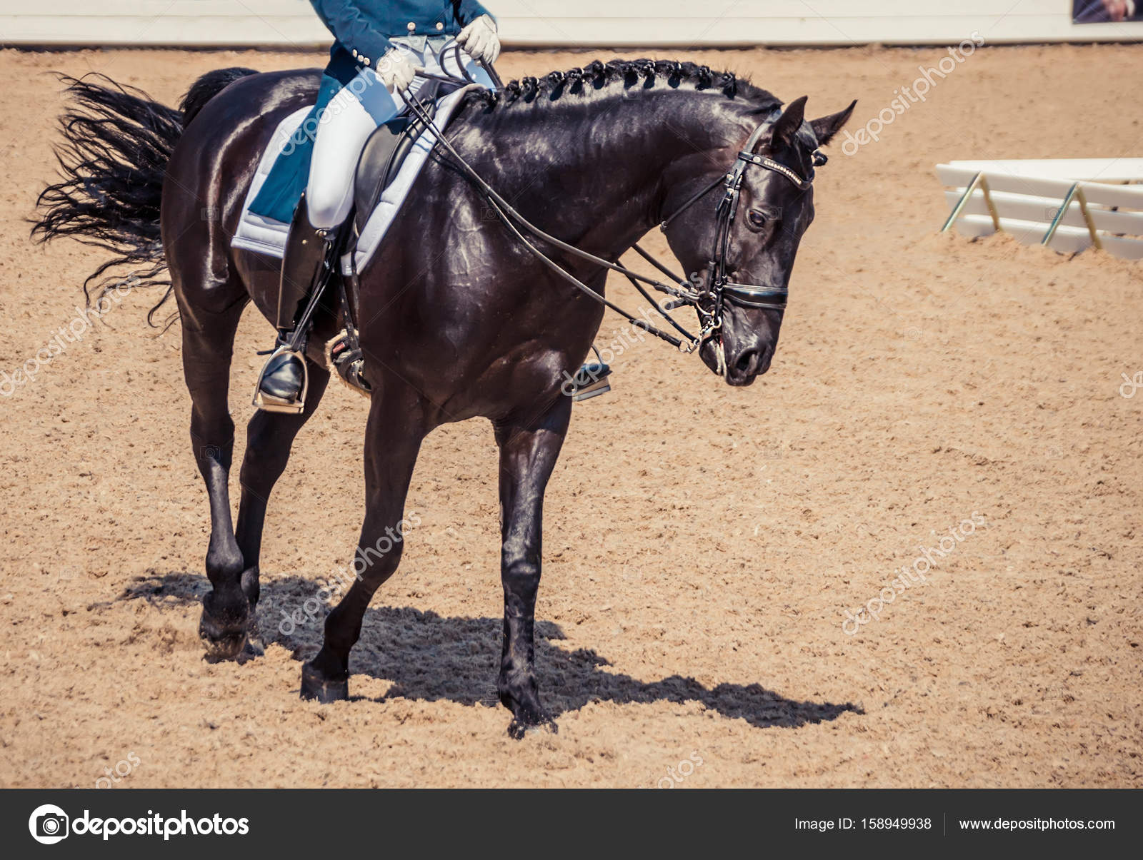 Black Horse Portrait During Dressage Competition Stock Photo C Martanovak 158949938