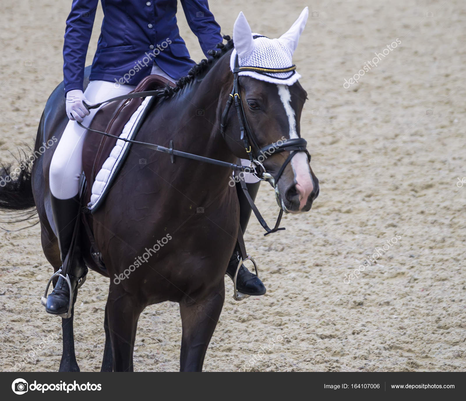 Black Horse Portrait During Dressage Competition Stock Photo C Martanovak 164107006