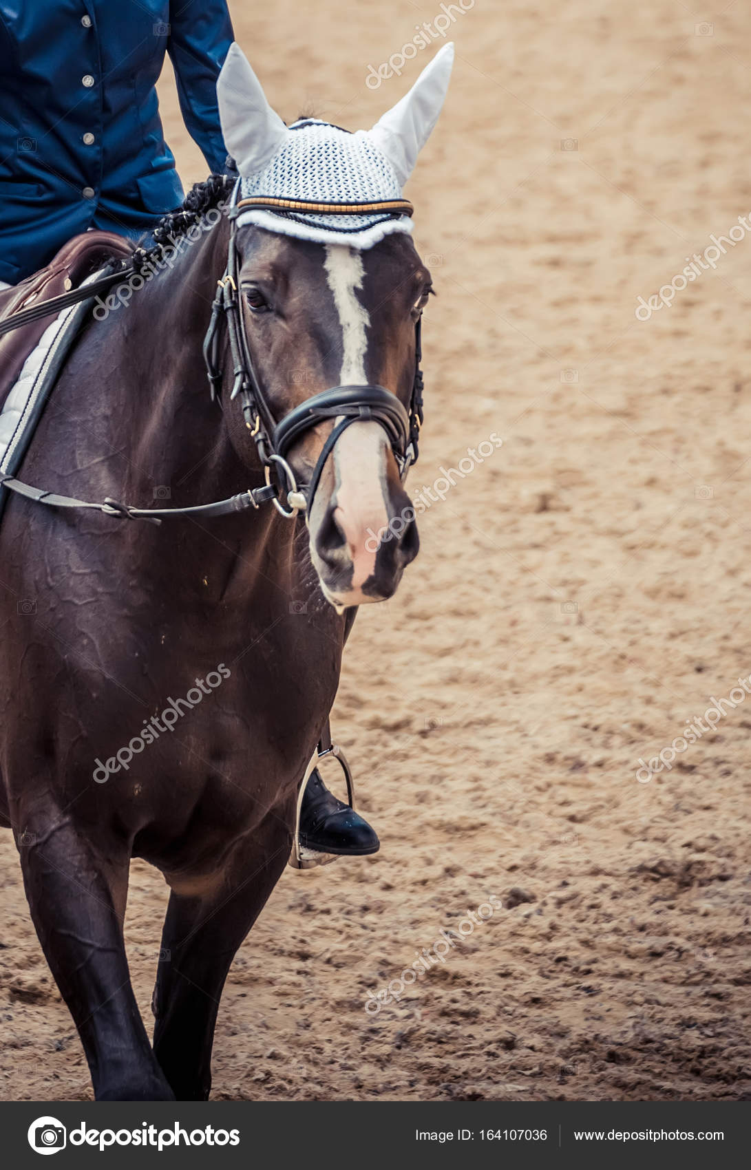 Black Horse Portrait During Dressage Competition Stock Photo C Martanovak 164107036