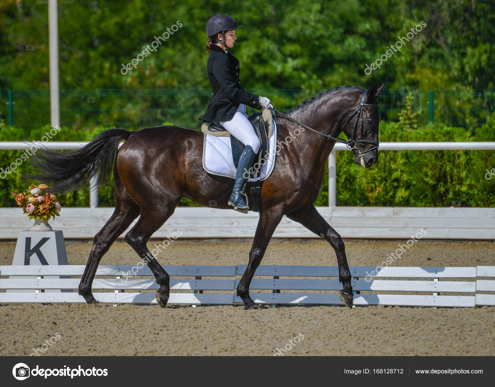 Young Elegant Rider Woman And Black Horse Dressage Test On Equestrian Competition Advanced Dressage Test Stock Photo C Martanovak 168128712