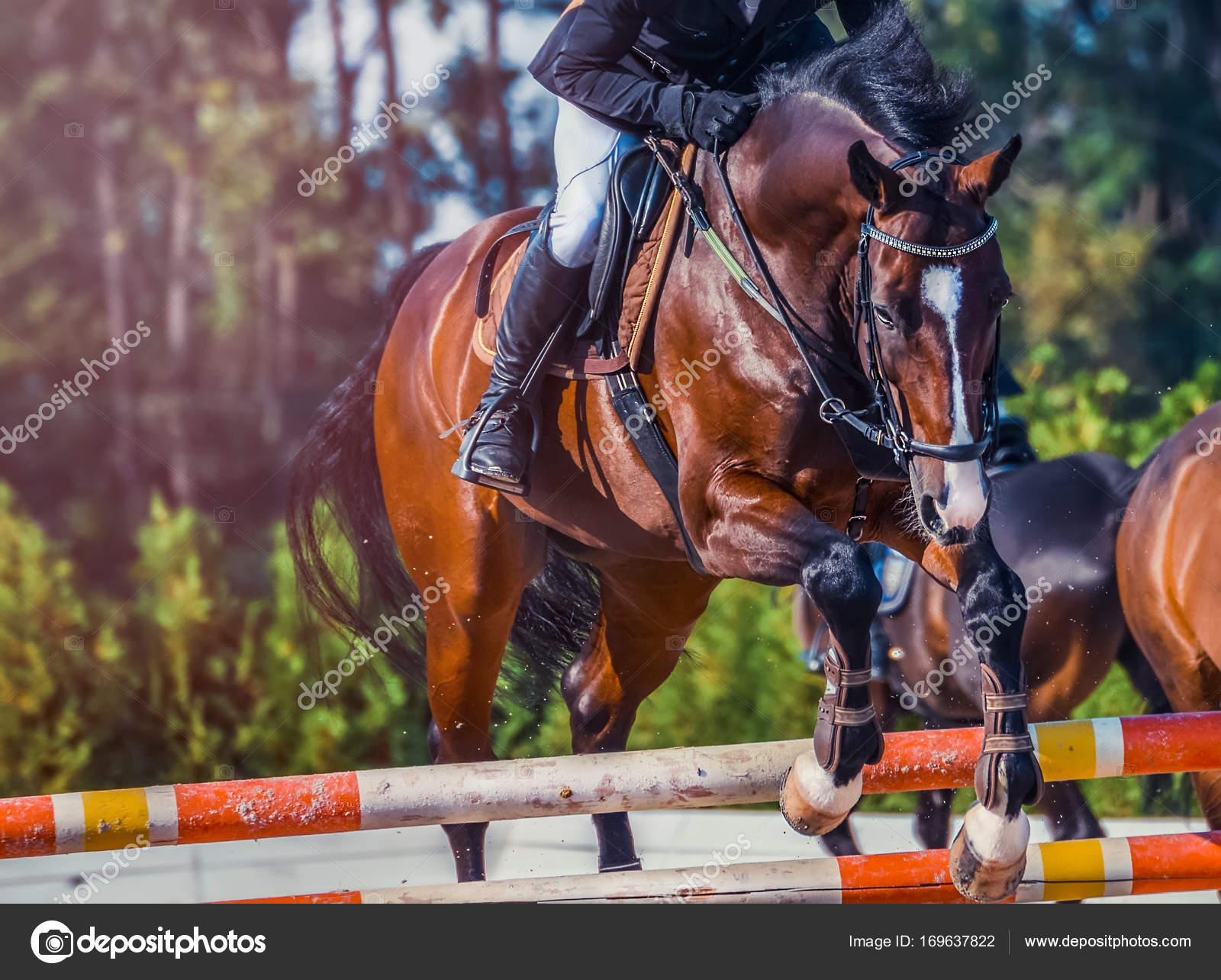 Bay Dressage Horse And Rider In Uniform Performing Jump At Show Jumping Competition Equestrian Sport Background Stock Photo C Martanovak 169637822