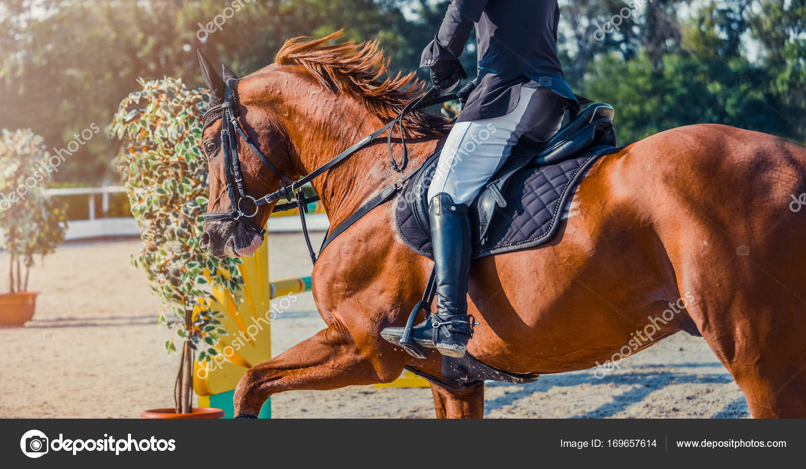 Sorrel Dressage Horse And Rider In Uniform Performing Jump At Show Jumping Competition Equestrian Sport Background Stock Photo C Martanovak 169657614