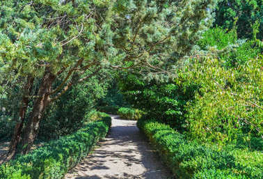 Green park with road, trees alley. Nice and comfortable great garden. Beauty nature landscape.