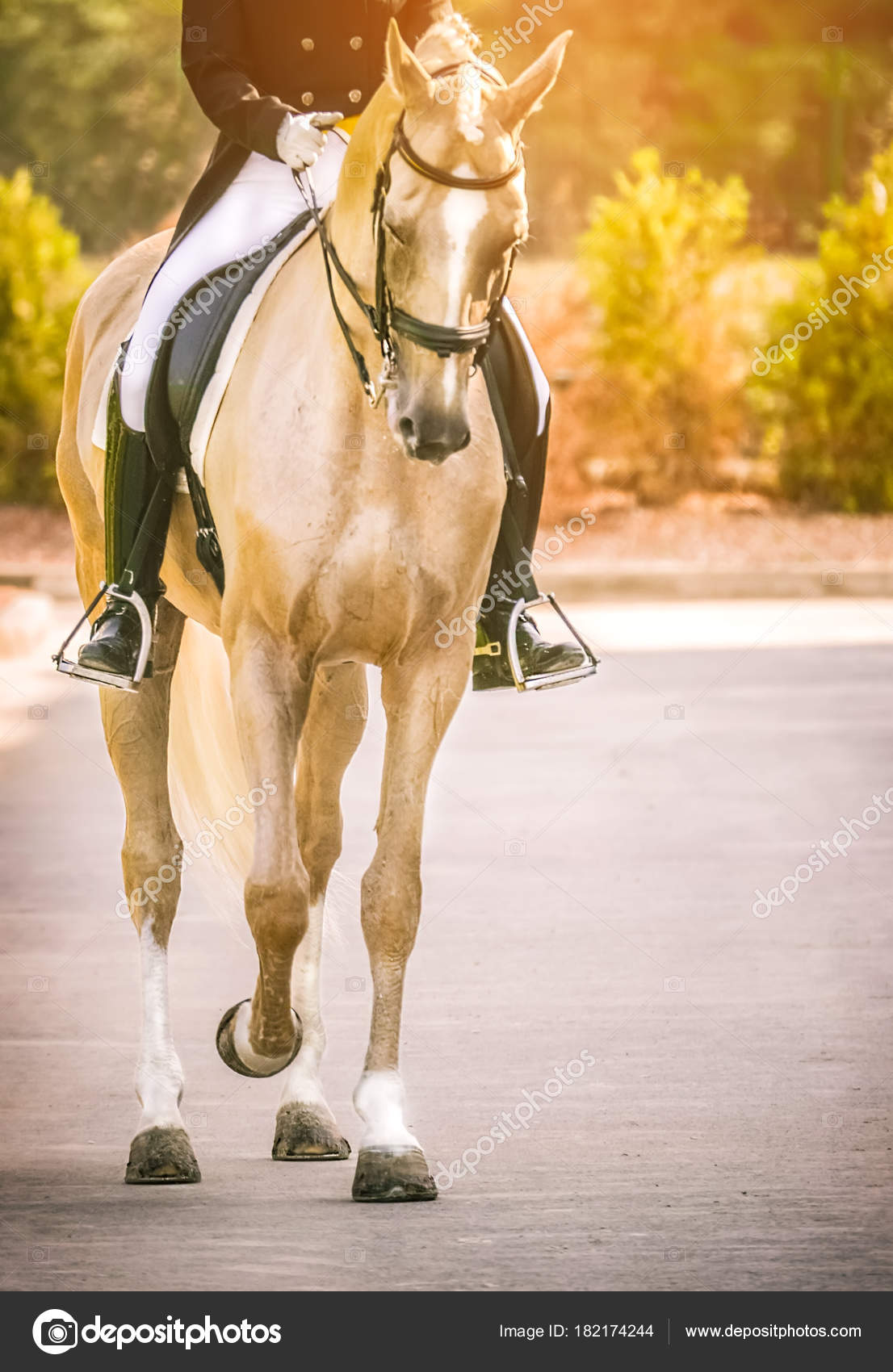 Elegante Reiter Frau Und Cremello Oder Perle Pferd Schönes
