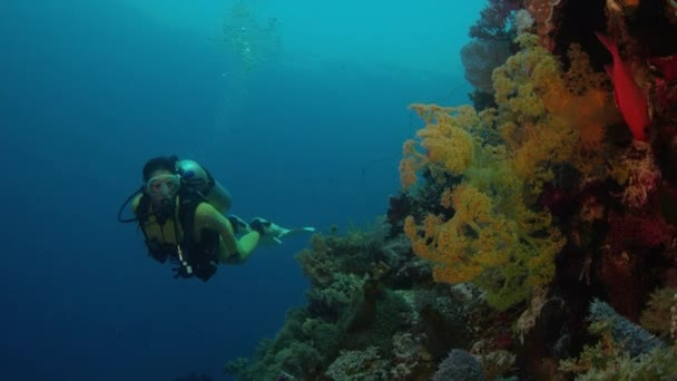 A diver dives in a colorful coral reef, WAKATOBI, Indonesia, NOV 2107, slow motion