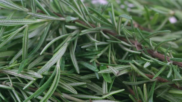 Close-up video dolly shooting,Freshly picked Rosemary herbs from garden. organic for cooking