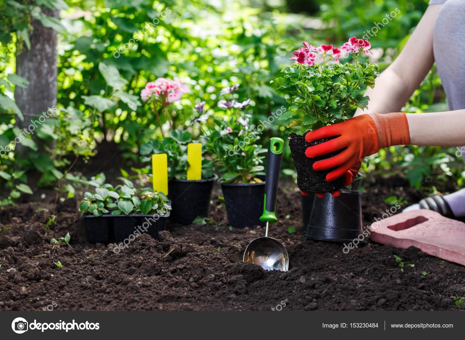 plantera i trädgården