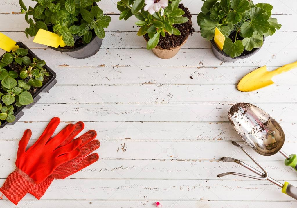 Gardening tools and flower on wooden background.