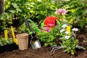 Květiny v hrnci před výsadbou a některé nástroje v letní zahradě